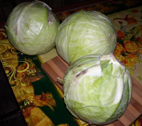 Готовим квашеную капусту в домашних условиях