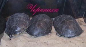 Черепахи на выставке экзотических животных в городском дворце культуры