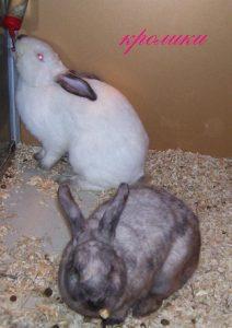 Кролики на выставке экзотических животных