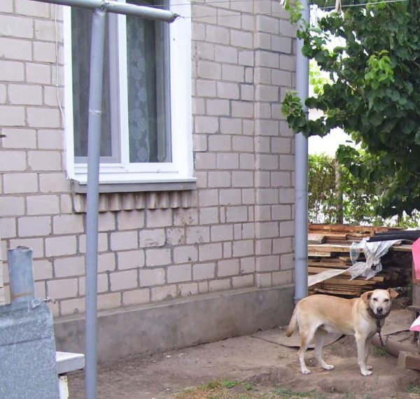 Улица Школьная 38 в Железном Порту, собака на привязи