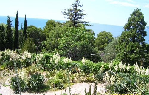 Оранжерея кактусов в Никите