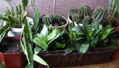 Комнатные растения на лоджии