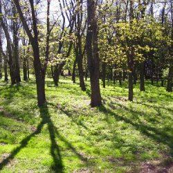 Природа Приднепровского парка