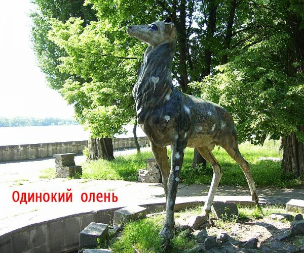 Одинокий олень в парке Кременчуга
