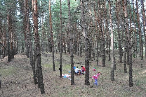 Отдых в сосновом лесу