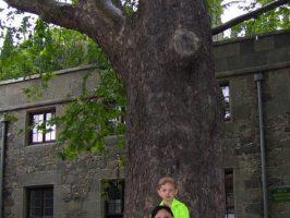 У старого дерева в Воронцовском дворце