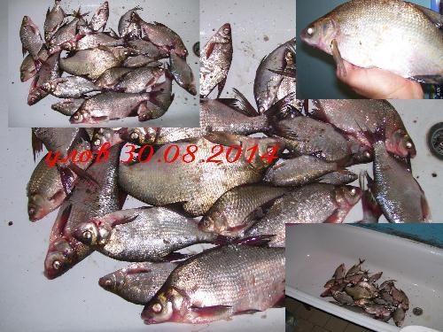 Днепровская рыба