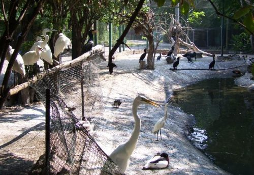 Птицы в Одесском зоопарке