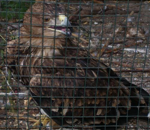 Хищные птицы в Одесском зоопарке