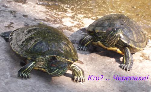 Пруд с черепахами в Одесском зоопарке