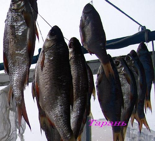 Вяленая Днепровская рыба