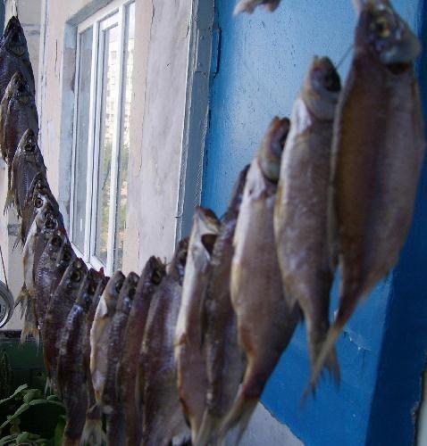 Приготовление сушеной рыбы в домашних условиях