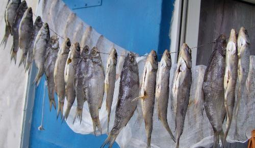 Накрытая марлей рыба