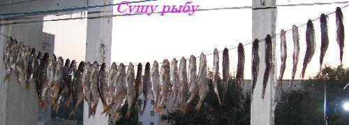 Как сушить рыбу?