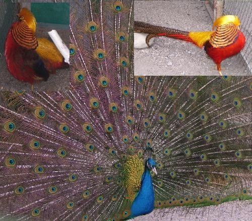 Птицы в дендропарке Кропивницкого