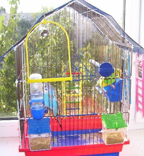 Клетка с попугайчиками