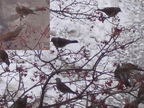 Стая зимних птиц