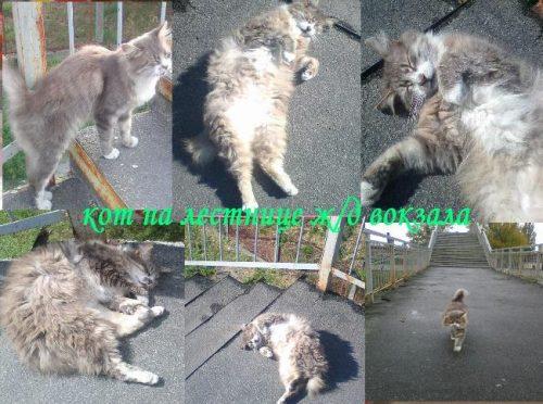 Коты Кременчуга