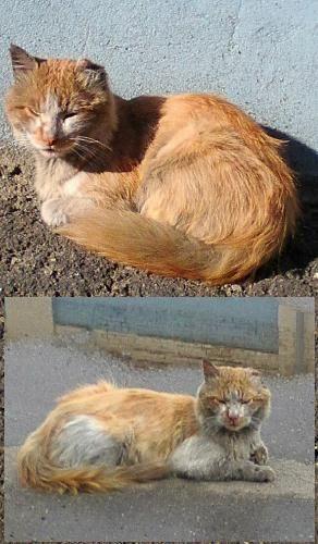 Кременчугские коты