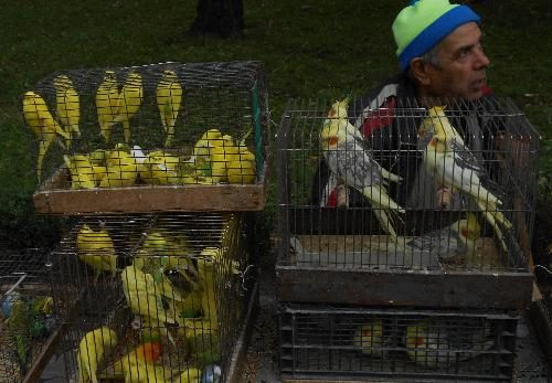 Попугаи в Кременчуге
