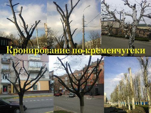 Вірубка деревьев