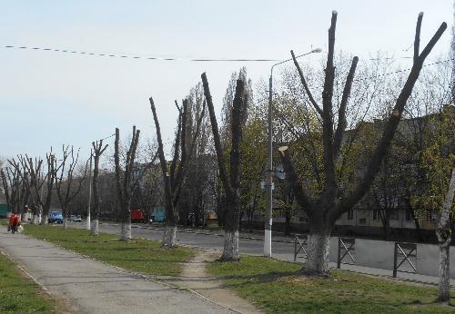 вірубка деревьев в Кременчуге