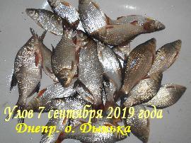 Рыбалка на Днепре. Кременчуг. Остров Дынька. Видео