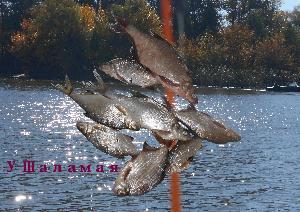 Рыбачим у острова Банан