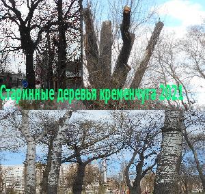 Старинные деревья Кременчуга