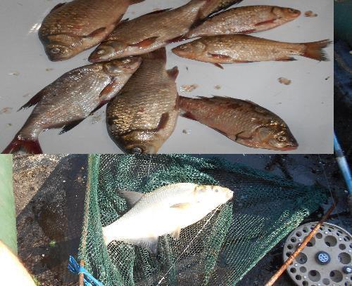 Удачная рыбалка 24 июля 2021г Улов
