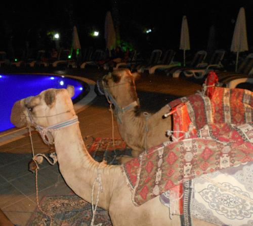Верблюды в Grand Mir'amor 4*